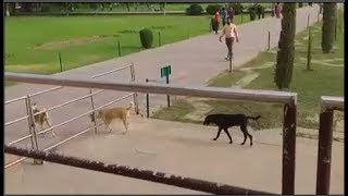 Dogs seen in Taj Mahal | ताजमहल का दीदार करने वालों मे अब कुत्तों की संख्या भी बढ़ी