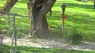 Squirrel outsmarts bungee cord feeder