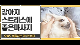 강아지 스트레스에 좋은 마사지 1편 (두피 얼굴 상체마…