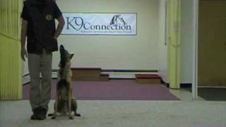 Dog Training - Steps For Competition Heeling