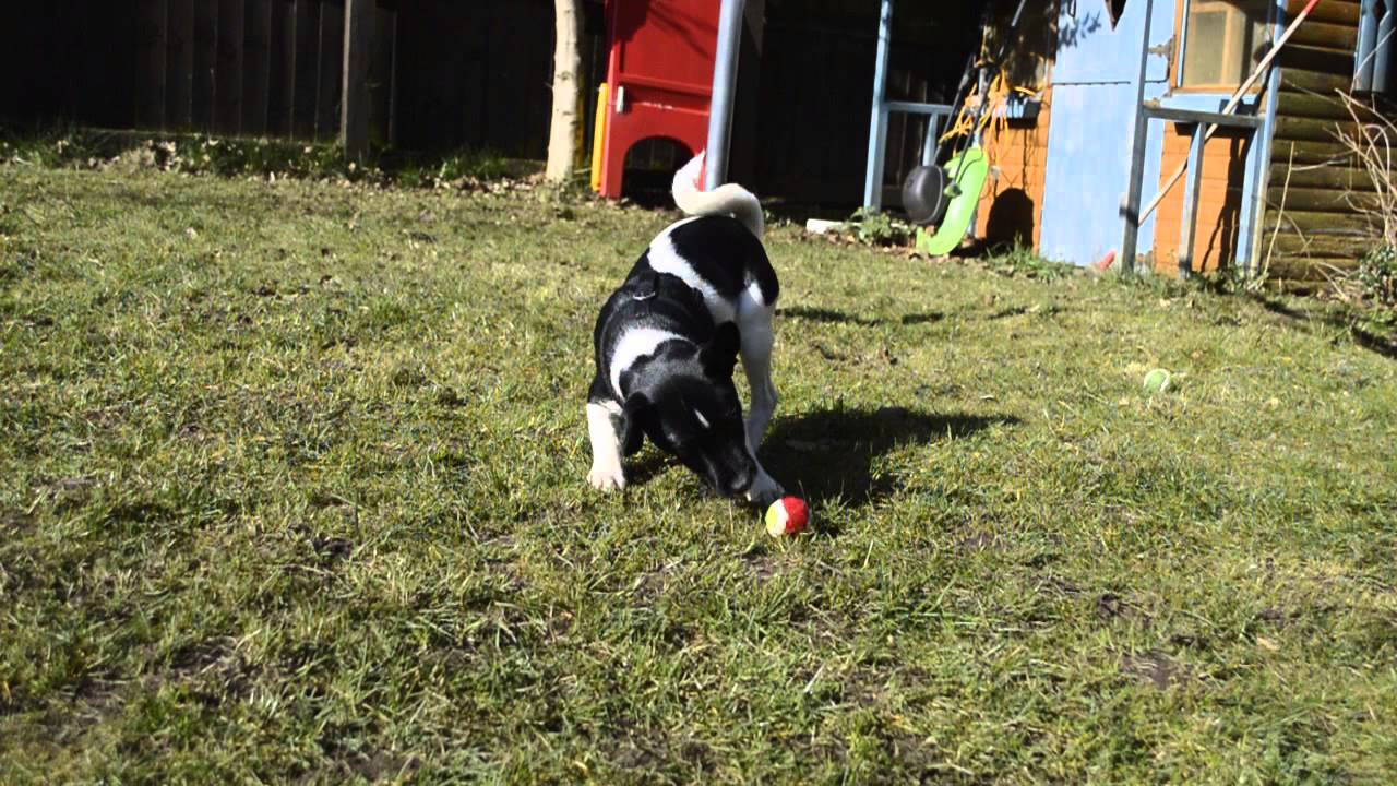 Moorlands Dog Rescue