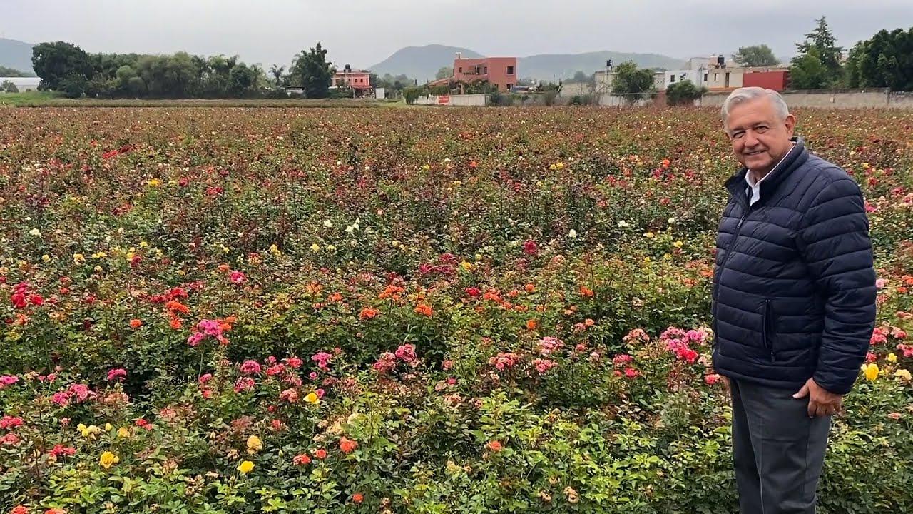 Saludo desde rosal en Atlixco, Puebla