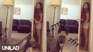 「なぜ嗅覚を使わない??」かくれんぼが下手すぎる犬