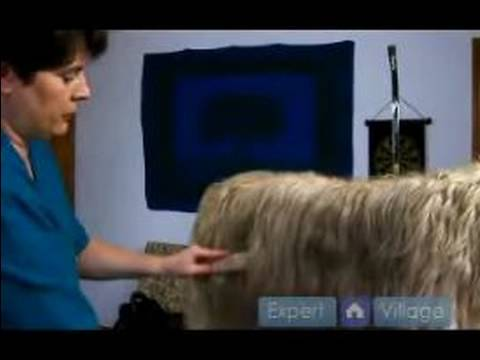 Long Haired Dog Grooming Instructions : Dog Grooming Brushing Tips