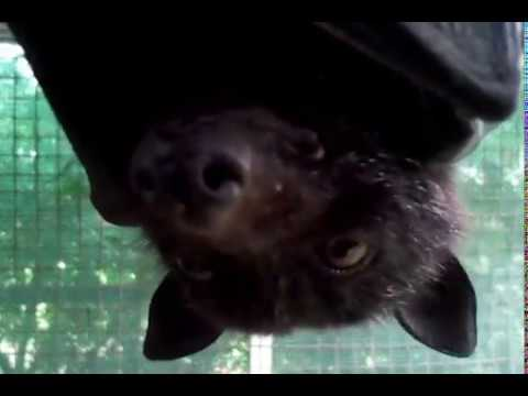 Showing You A Bat From Head To Toe Then This Happens. thumbnail