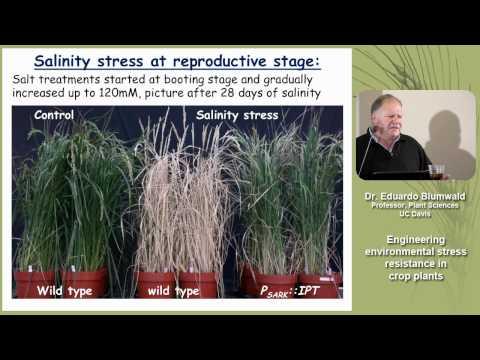 Engineering Environmental Stress Resistance in Crop Plants