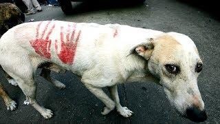 Ученые массово убивают собак ради науки