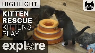 Kitties Playing with Ball Toy - Live Cam Highlight