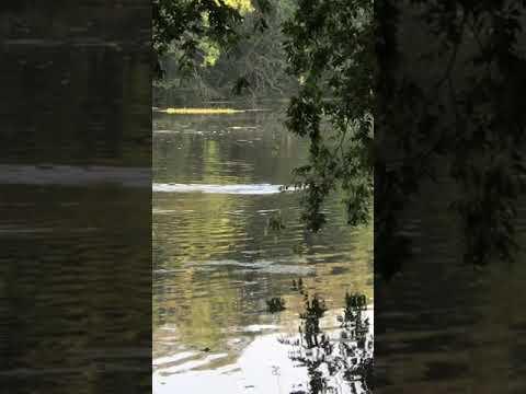 Hurricane Harvey Gators
