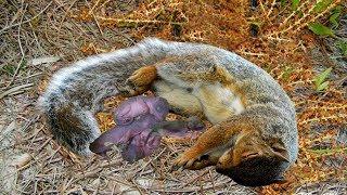 Increíble ardilla dando a luz a 4 lindos bebés salvajes