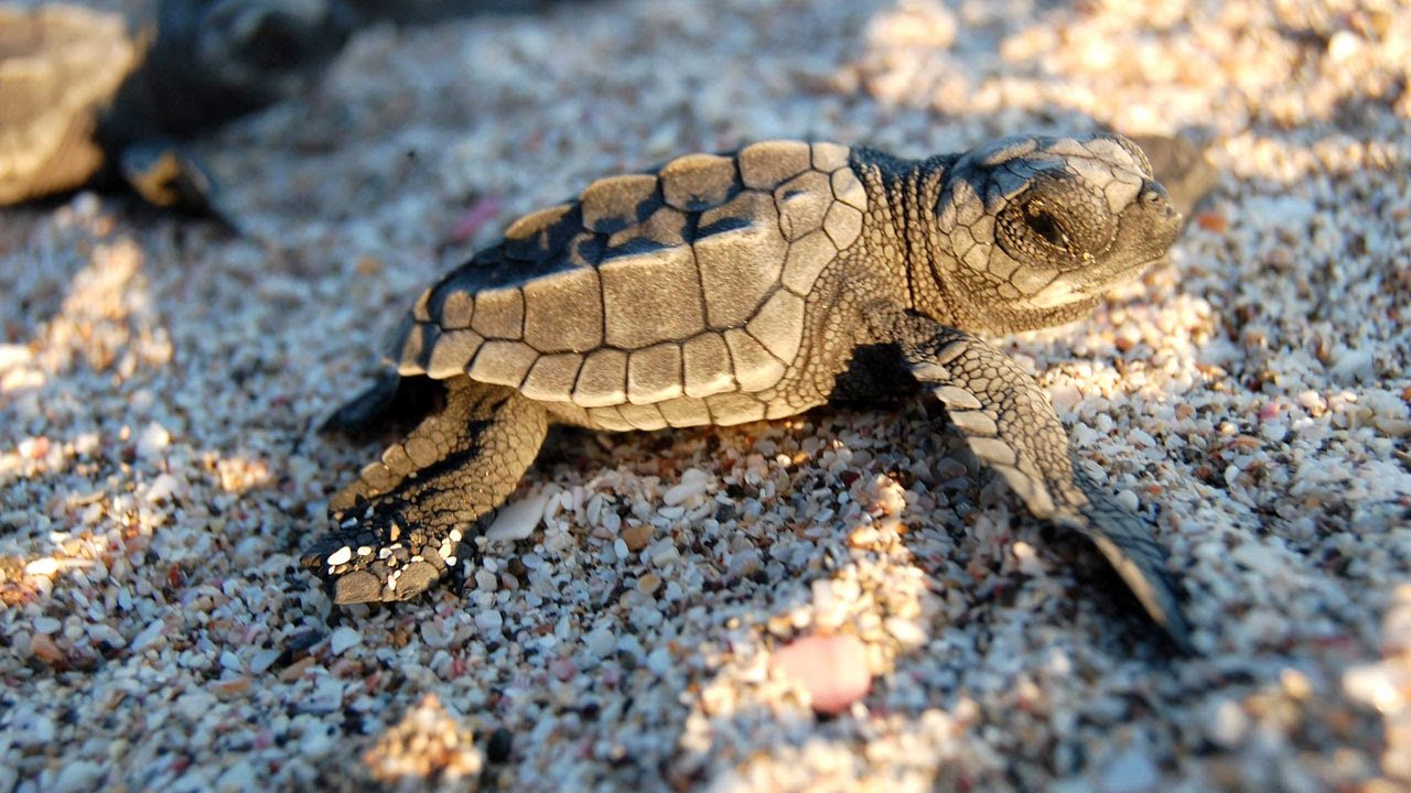 Saving turtles in Nicaragua by working with communities