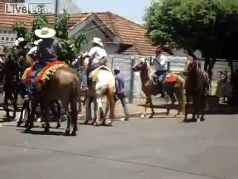 Pit Bull attacking horses & donkeys - Brazil