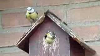 vuclip Vogelhuisje zelf maken koolmees pimpelmees voederen