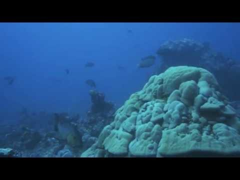 Micronesia - Spearfishing