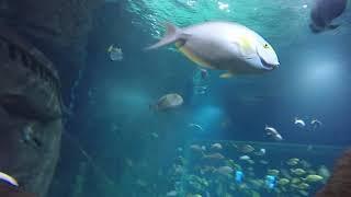 Погладил морскую черепаху.
