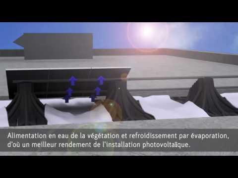 toiture v g talis e photovolta que solaire toit vert. Black Bedroom Furniture Sets. Home Design Ideas