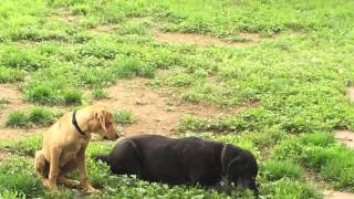 Save A Rescue Hound With Ruff Rescue
