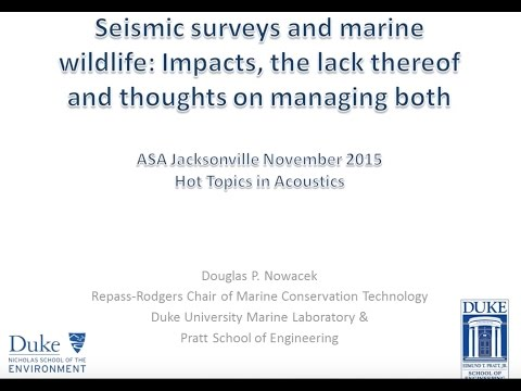 Seismic Surveys and marine wildlife: Impact, the lack thereof and thoughts on managing both