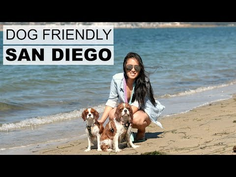 Things to do with your dog in San Diego California | Dog Friendly Activities Pet Friendly