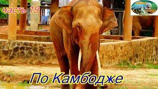 По Камбодже.Зоопарк,бешенные цикады,странные куры.часть 19