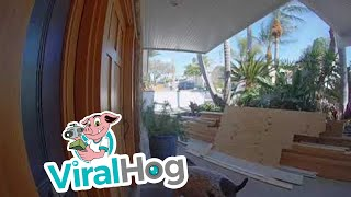 Porch Pirate Pooch || ViralHog