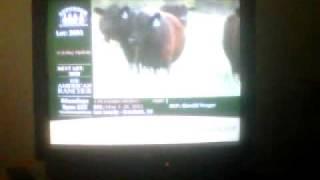 cow auction rap 3gp