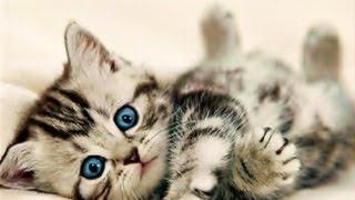 Funny names for cats | best 15 funny names for cats female