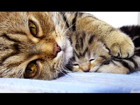 Mom Cat Hugs Her Baby Kitten