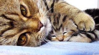 Mom Cat Hugs Her Baby Kitten