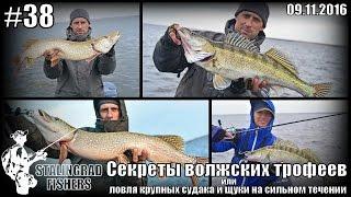 Секреты волжских трофеев или ловля крупных судака и щуки на сильном течении - 09.11.2016