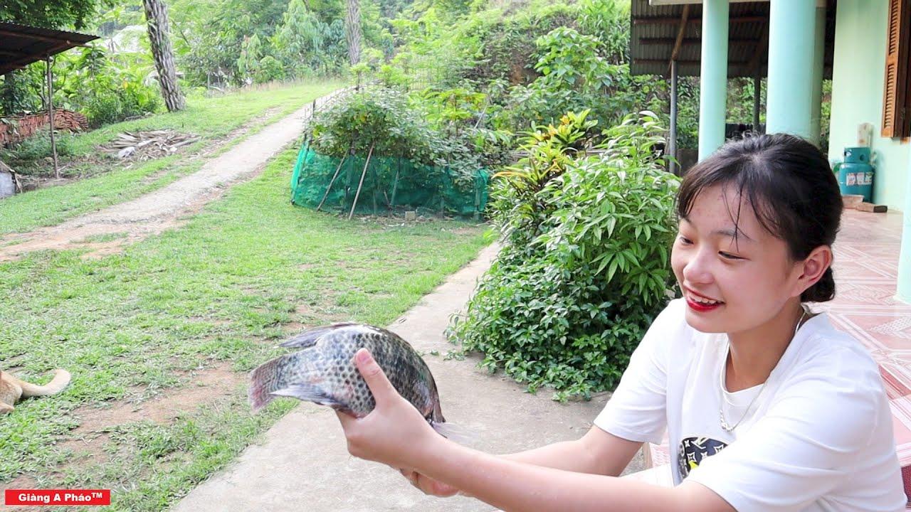 Hái Mít - Làm Món Cá Rô Bọc Lá Chuối Hấp Quả Bàng Tang