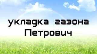 Укладка рулонного газона - Gazon-Petrovich.ru(Рулонный газон укладывается на плодородный слой почвы, плотно, стык к стыку, но и так, чтобы один слой не..., 2015-11-17T07:53:53.000Z)