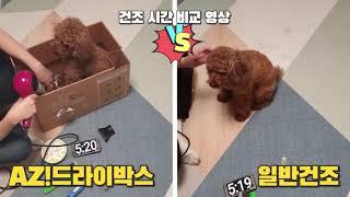 강아지 털말리기! 아지드라이박스 vs 일반드라이 비교영…