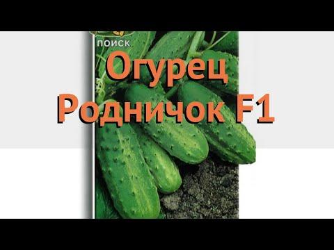 Огурец обыкновенный Родничок F1 (rodnichok f1) 🌿 обзор: как сажать, семена огурца Родничок F1