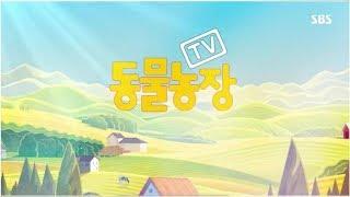박한울 기자 - 'TV 동물농장' 다시 만난 '봉이'…하반신 마비 재활치료, 성공적?