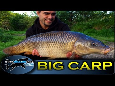 BIG CARP Fishing Tips In Summer - TAFishing Show