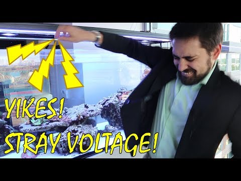 ⚡ How To Check Stray Voltage In An Aquarium. (How I Made A Shocking Discovery)