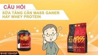 Sữa tăng cân Mass gainer hay sữa tăng cơ Whey protein thành phần và cách sử dụng