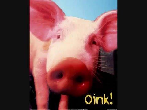 PIG!!!(Lolilpop)