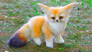 15 Cutest Pets You Can Legally Own