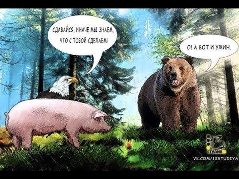Крым Россия медведь или кабанчик ?