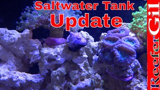 75 Gallon Saltwater Reef Tank Update (january 2013)