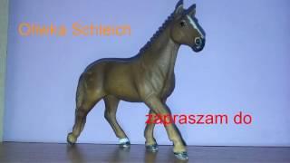 Moja pasja konie!