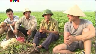Vietnam discovery - Rice harvest time