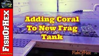 Frag System Update | Adding Coral | QT @ MDT Updates