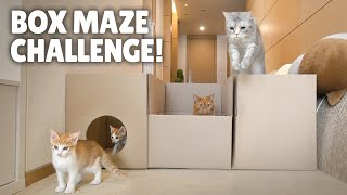 Box Maze Challenge! Think Outside the Box! | Kittisaurus