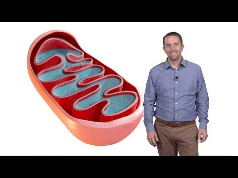 Jared Rutter (U. Utah, HHMI) 1: Mitochondria: The Mysterious Cellular Parasite