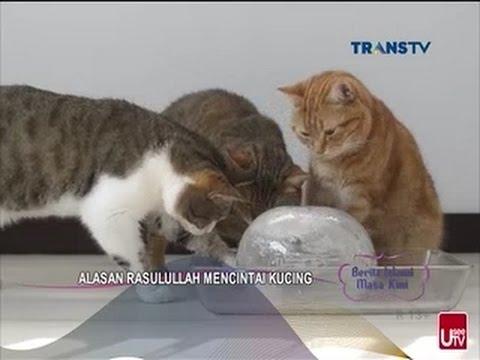 Alasan Rasulullah Mencintai Kucing - BERITA ISLAMI MASA KINI 07 Maret 2017 Mp3