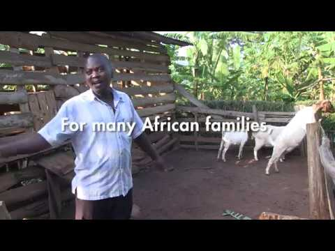 Lifetime Gifts - Goats - YouTube