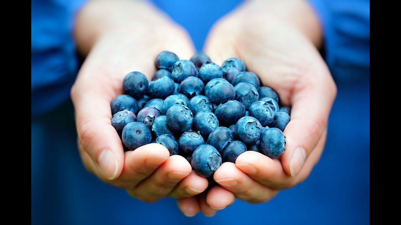 conte cultiva arándanos y diabetes